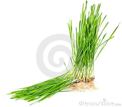 Grass growing from the roots