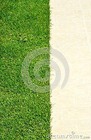 Grass growing up between the stones