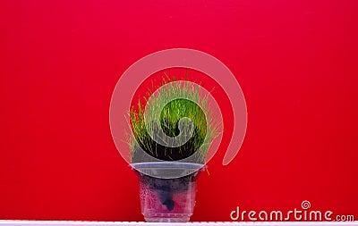 Grass Head