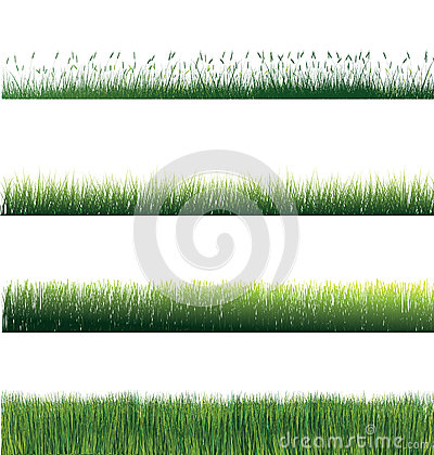 Free Grass Isolated Stock Photo - 45674210