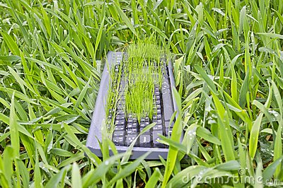 Grass in the keyboard