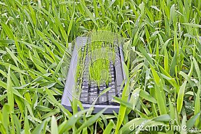 Grass in the keyboard