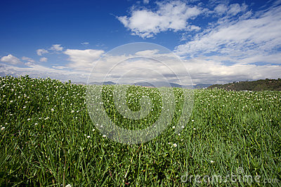 Grass land under blue sky