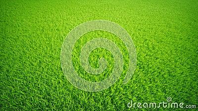 Grass lawn.