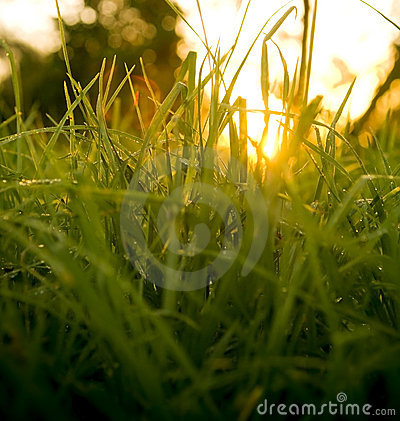 Grass Level Sunrise