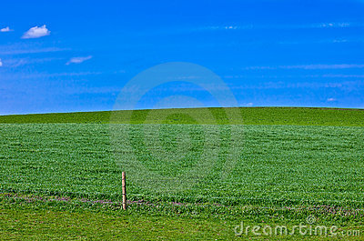 Grass meadow background