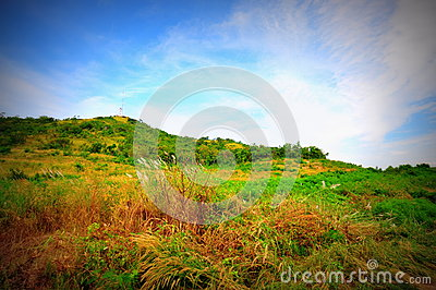 Grass Meadow and Blue Sky