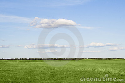Grass meadow, the blue sky and white clouds