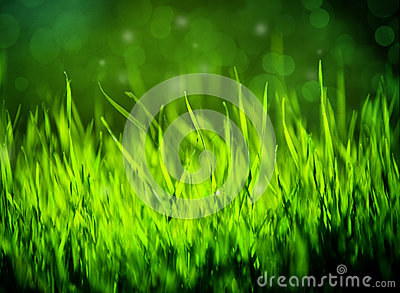 Green Grass Summer Background