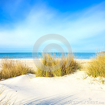 Free Grass On A White Sand Dunes Beach, Ocean And Sky Stock Image - 28816641