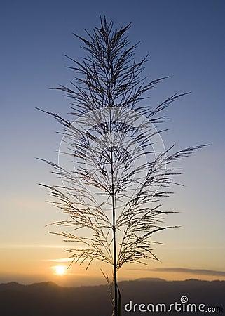 Free Grass On Horizon Stock Photo - 643440