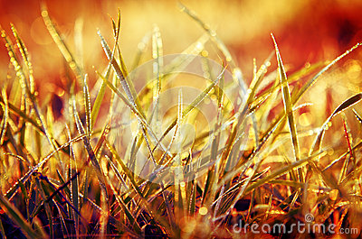 Grass with orange background