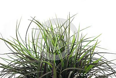 Grass Patch 1