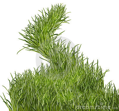 Free Grass Path Stock Image - 8765781