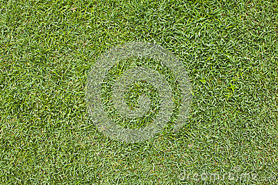 A grass pattern.