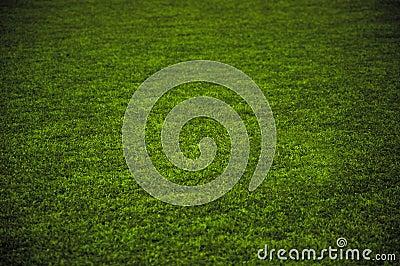 Grass Playground