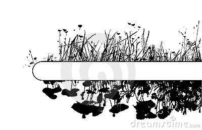 Grass and poppy flowers with place for your text.