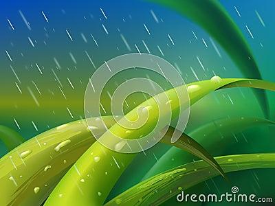 Grass in rain