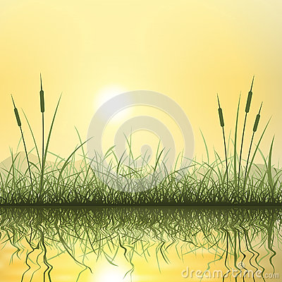 Grass and Reeds