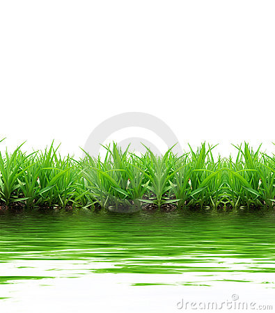 Grass reflection