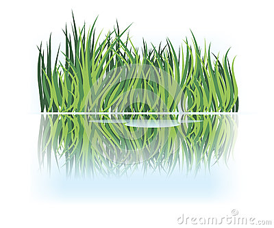Grass reflection in calm water