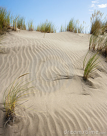 Grass in sand