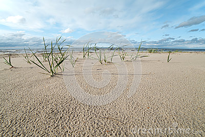Grass and sand.
