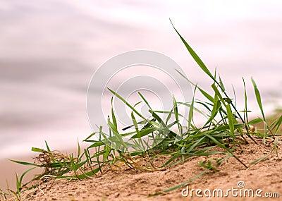 Grass sand beach close up