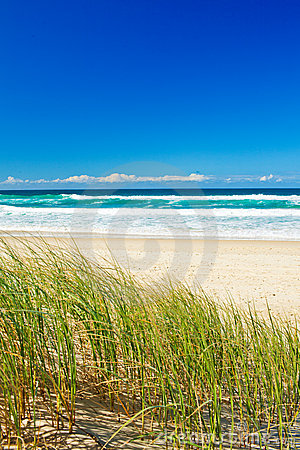 Grass and sandy beach on the Gold Coast Queensland