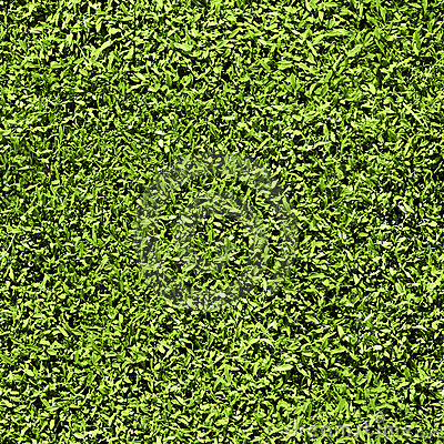 Free Grass Seamless Pattern Stock Images - 14172364