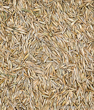 Free Grass Seed Stock Photos - 14855573