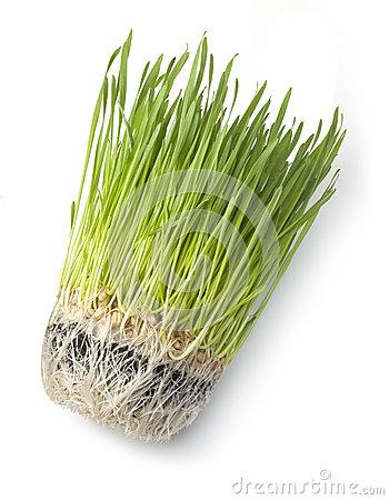 Wheat Grass Green health Food