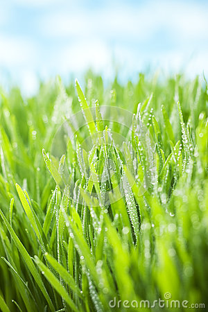 Green Fresh Grass Sky Background