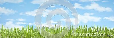Grass Sky Banner Background
