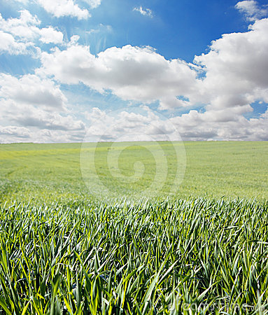 Grass and sky with clouds