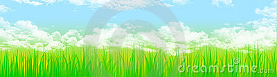 Grass and sky web header
