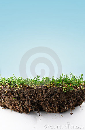 Free Grass Soil Royalty Free Stock Photography - 20142477