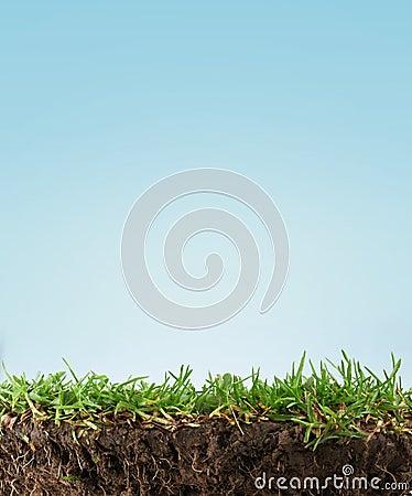 Free Grass Soil Stock Photos - 20142483