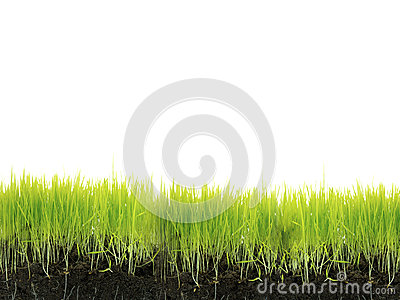 Grass with soil
