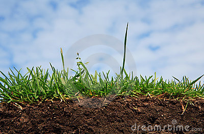 Grass - soil and root