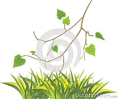Grass and sprig of birch