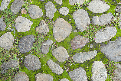 how to clean moss off paving stones