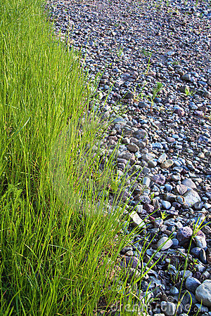 Grass and stones