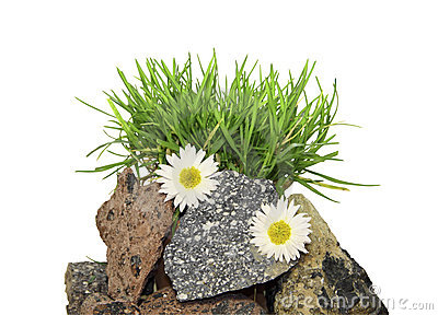 A  grass on stones  on a white background