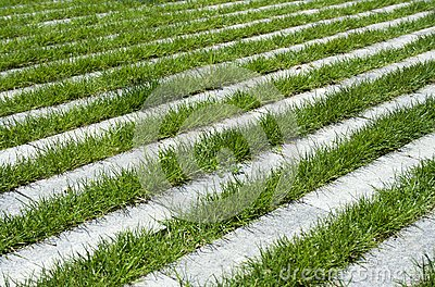 Grass stripes, raw