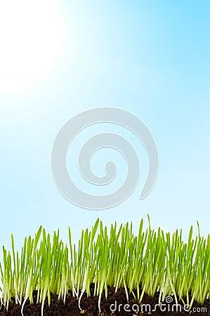 Grass and sun