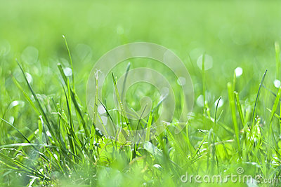 Grass in sun light