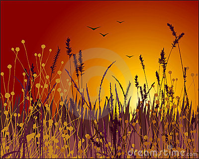 Grass and sunset vector