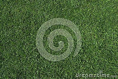 Grass texture (zenith)