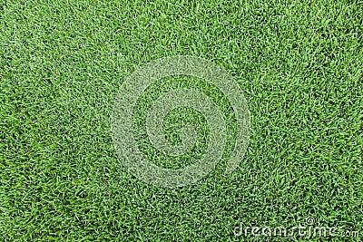 Grass top view